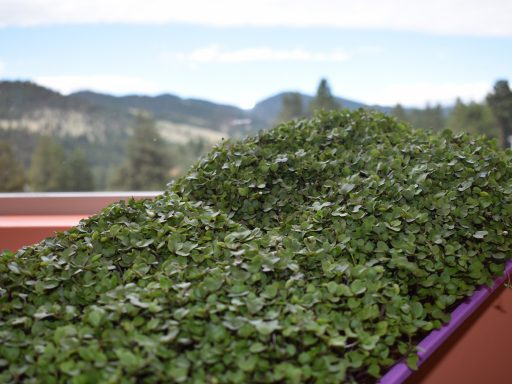 4 Things You Must Know About our MICROGREENS