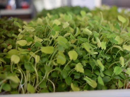 3 Quick and Easy Snacks For our MICROGREENS